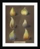 Figs by George Brookshaw