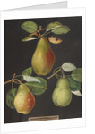 Pears by George Brookshaw