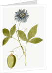 Passiflora (Passion flower) by Nikolaus Joseph Jacquin