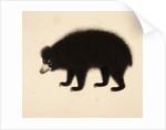 Sloth Bear by Haludar
