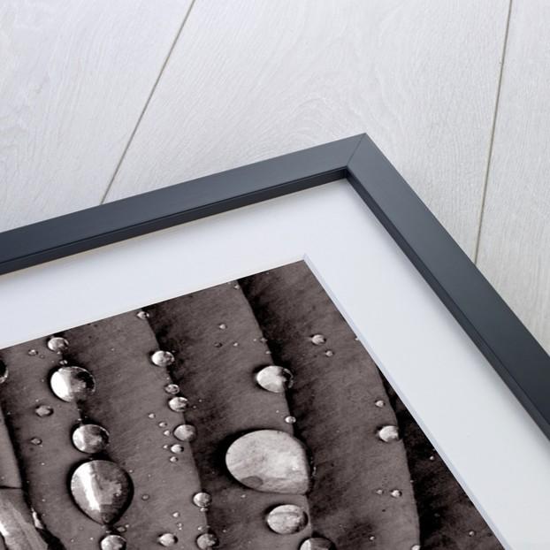 After Rain I by Phillipe Delmouz