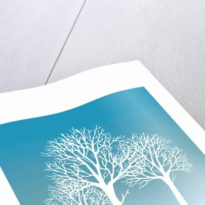 Winter Trees by Ian Solomon