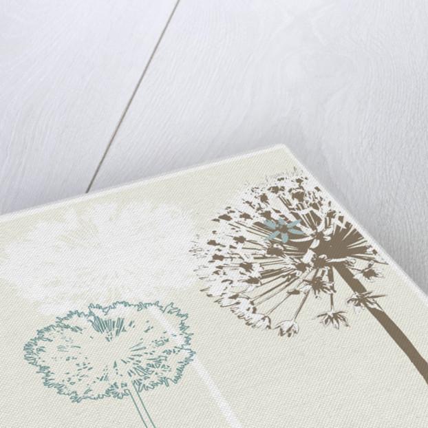Allium by Paula Dale