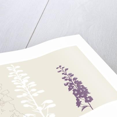 Organic Plantlife by Paula Dale