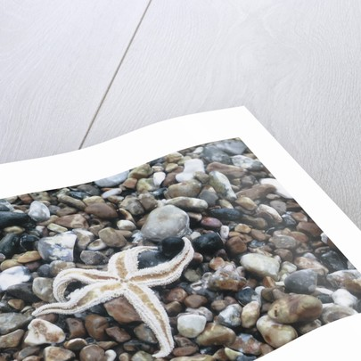 Beached Starfish by Roger Logan