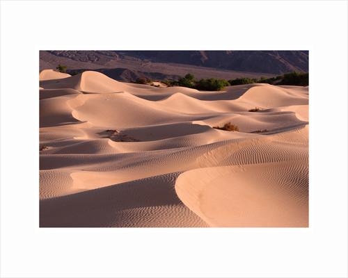 Sand Dunes by Phillipe Delmouz