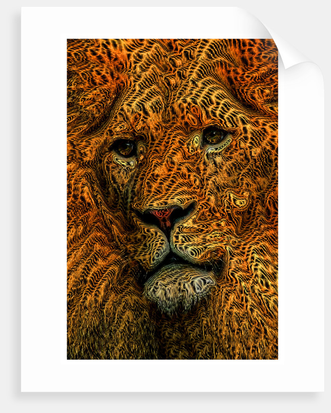 Lion by Dave Pickford