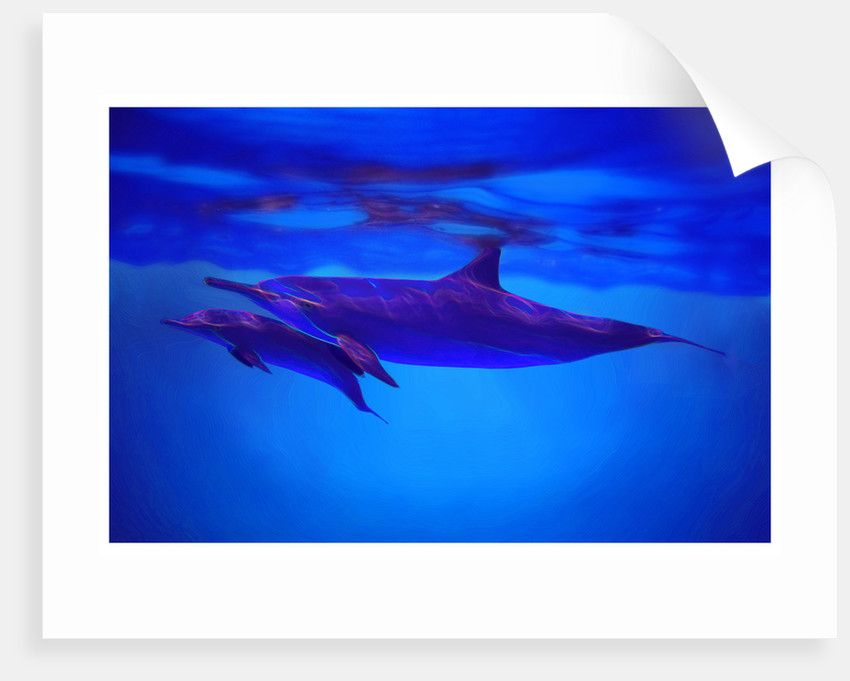 ?like dolphins can swim by Dave Pickford