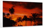Tropical Sunset by Dean Chittock