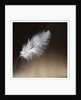 LIGHT AS A FEATHER by Phillipe Delmouz