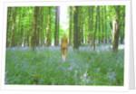 Natural walk by Mark Varley