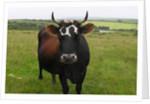 The Bull by Mark Varley