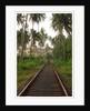 Rail line by Mhari Horton