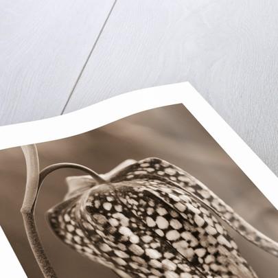 Duotone Image by Clive Nichols