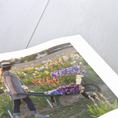 Iris Cayeux, France - Woman With Cart In Iris Show Fields by Clive Nichols