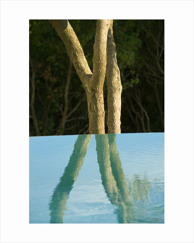 An Olive Tree Reflected In The Infinity Swimming Pool: Gina Prices' Garden, Corfu by Clive Nichols