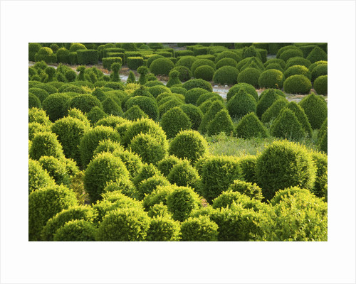 Bellamont Topiary, Dorset: The Topiary Nursery In Evening Light by Clive Nichols