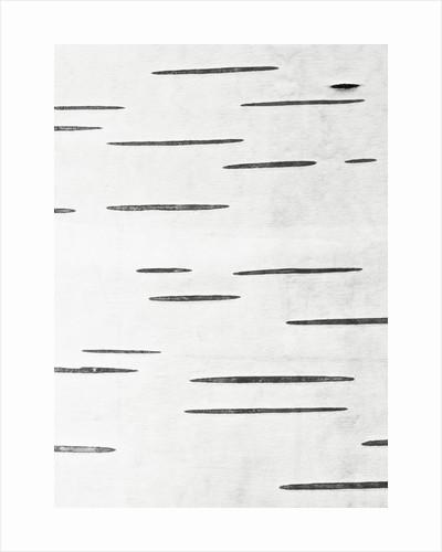 Abstract Duotone Close Up Of Bark Of Betula Papyrifera by Clive Nichols