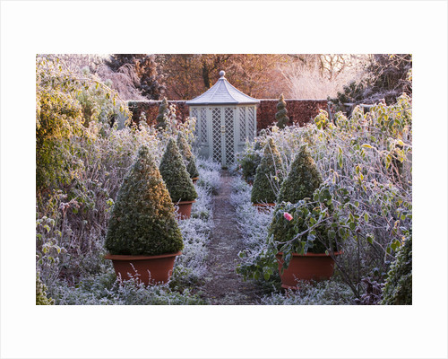 Wollerton Old Hall, Shropshire: Winter Garden In Frost -  Path Through The Rose Garden To A Summerhouse With David Austin Roses And Terracotta Containers With Clipped Box by Clive Nichols
