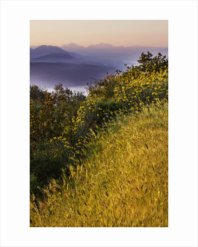 The Rou Estate, Corfu: Wildflowers In The Hills Beside The Rou Estate With The Albanian Mountains Beyond, At Dawn by Clive Nichols