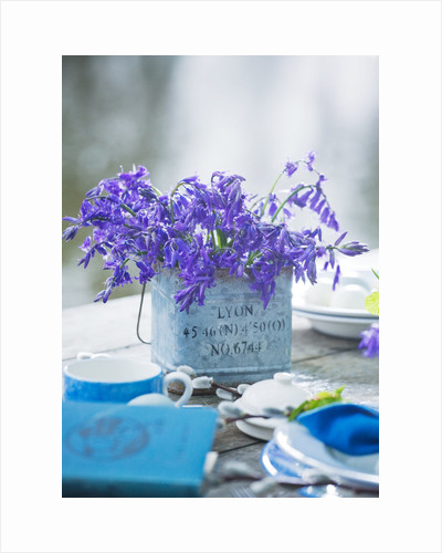 Table setting with bluebells in metal container by Clive Nichols