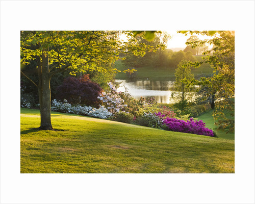 Dudmaston Estate, Shropshire. The National Trust. May 2012 - Evening View Past Rhododendrons And Azaleas To The Lake by Clive Nichols