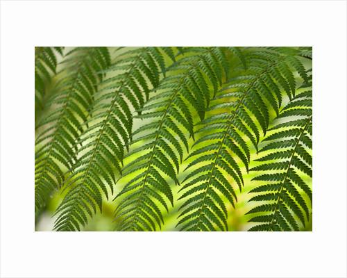Ferns in woodland by Clive Nichols