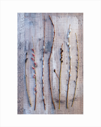 Still life of willows and sorbus stems by Clive Nichols