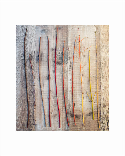 Still life of cornus stems by Clive Nichols