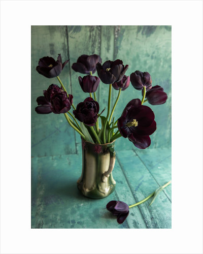 Still life vase arrangement of black tulips by Clive Nichols