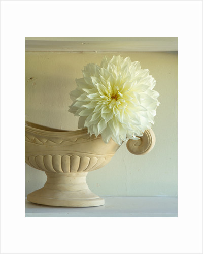 Constance spry vase with dahlia white sensation by Clive Nichols