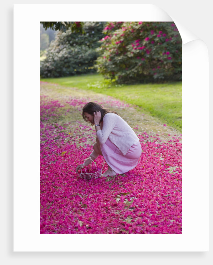 Tregothnan, Cornwall: Girl Picking Fallen Flowers Of Rhododendron 'russellianum' by Clive Nichols