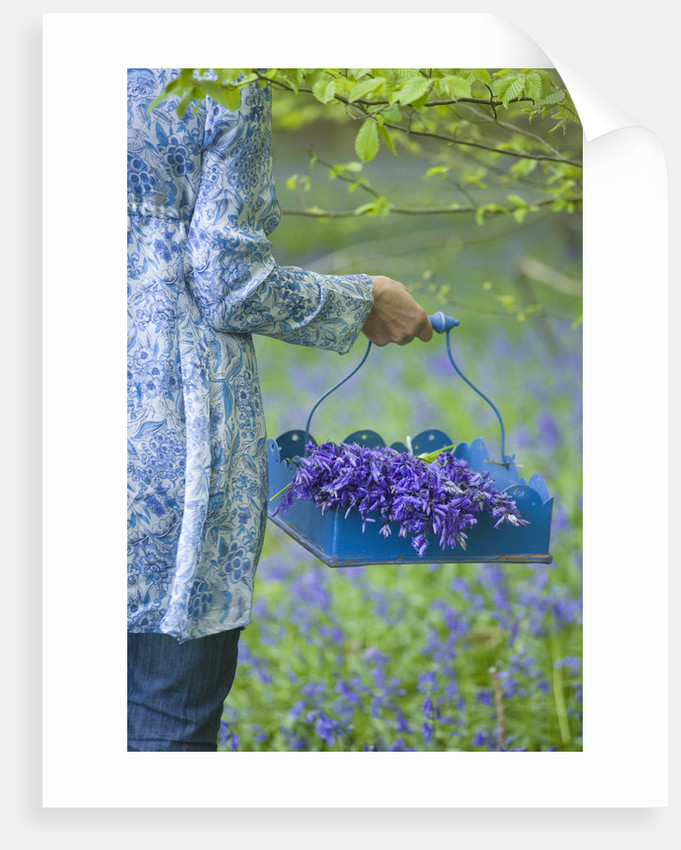 Bluebells : Styling By Jacky Hobbs by Clive Nichols