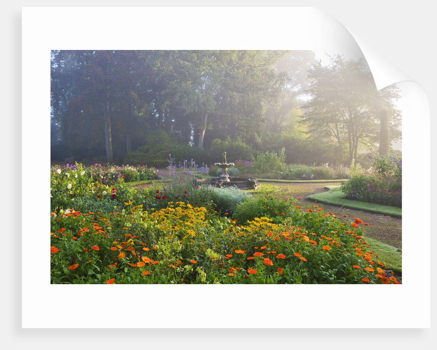 Ragley Hall Garden, Warwickshire: Fountain Garden At Dawn With Dahlias And Calendula by Clive Nichols