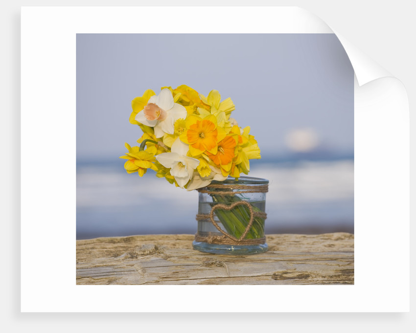 R.a.scamp, Quality Daffodils, Cornwall: Daffodils In A Glass Jar By The Seaside Near Falmouth by Clive Nichols
