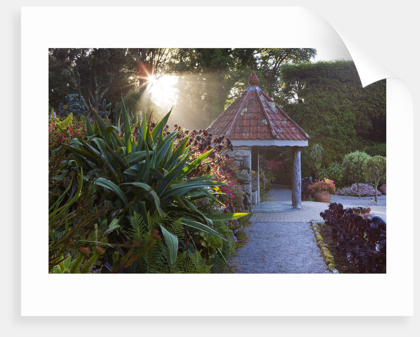 Tresco Abbey Garden, Tresco,  Isles Of Scilly by Clive Nichols