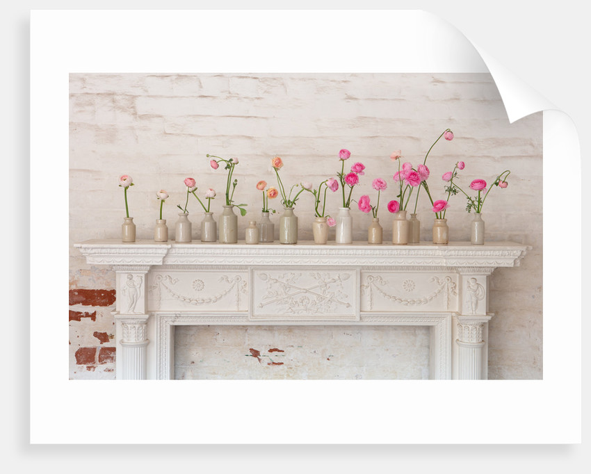 Marbury Hall, Shropshire: white fireplace with stoneware bottles of ranunculus by Clive Nichols