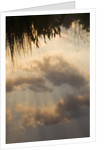 Reflections Of The Sky And Clouds In A Pond. Water, Environment, Lake, Pond by Clive Nichols