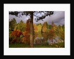 Bodenham Arboretum, Worcestershire: Autumn Colours Beside The Big Pool Dominated By Swamp Cypresses (taxodium Distichum) by Clive Nichols