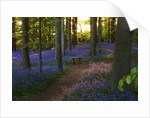 Coton Manor, Northamptonshire: The Bluebell Wood In Spring In Evening Light With Wooden Bench/ Seat by Clive Nichols