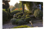 Provence, France: Garden Of Nicole De Vesian, La Louve: Gravel Terrace Beside The House At Dawn With Clipped Topiary Shapes by Clive Nichols