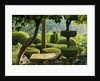 Provence, France: Garden Of Nicole De Vesian, La Louve: Gravel Terrace Beside The House At Dawn With Clipped Topiary Shapes And View Out Onto Countryside (garrigue) Beyond by Clive Nichols