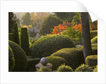 Provence, France: Garden Of Nicole De Vesian, La Louve: Clipped Topiary Shapes At Dawn With Stags Horn Sumach (rhus Typhina) In Background by Clive Nichols