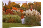 Wakehurst Place, Sussex: The Top Pool, Lake In Autumn With Pampas Grass And Maples - Evening Light by Clive Nichols
