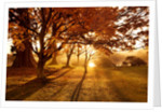 Wakehurst Place, Sussex - Autumn - Early Morning Sunlight Illuminates Japanese Maple Trees (acers) Near The Lake by Clive Nichols
