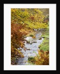 Wakehurst Place, Sussex - Autumn Colour Beside A Stream Running Down To The Water Garden by Clive Nichols