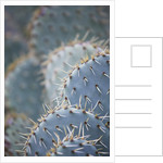 Domaine Du Rayol, France: Close Up Of The Spines Of A Cactus. by Clive Nichols