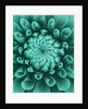Teal Coloured Flower Of Dahlia Dahlia Tiptoe (miniature Flowered Decorative) by Clive Nichols