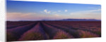 Field Of Purple Lavender Near Valensole, Provence, France, With Mountains In The Background. Summer, July by Clive Nichols