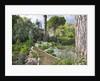 Ninfa Garden, Giardini Di Ninfa, Italy by Clive Nichols